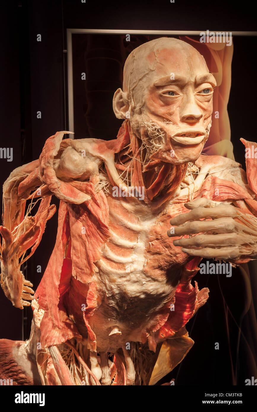 Italy Torino Palaisozaki The Exhibition The Human Body Exhibition