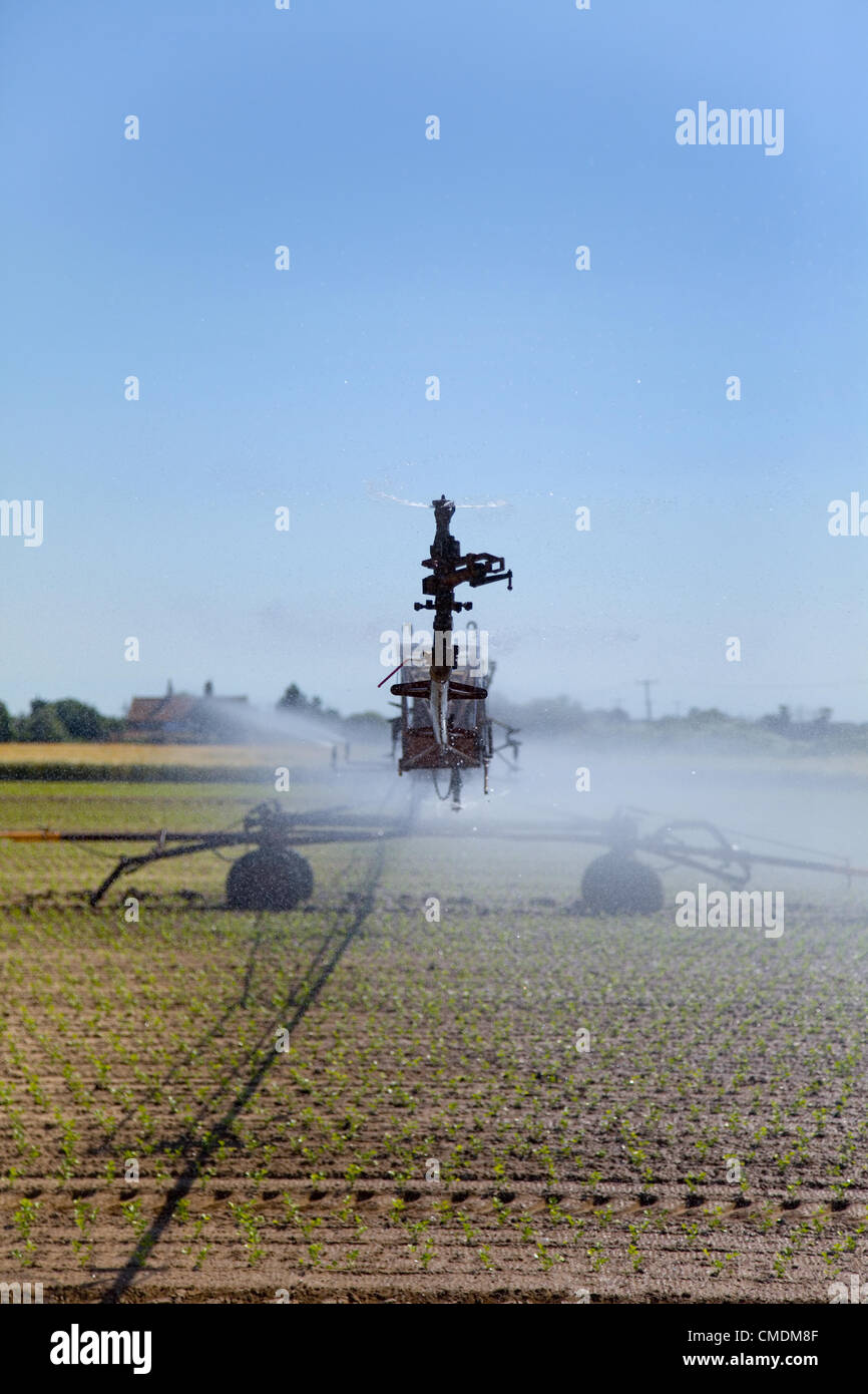Field sprinkler system, irrigating the young crop, set against a blue sky in Norfolk. - Stock Image