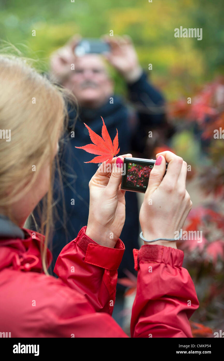 Autumn colour at Westonbirt Arboretum, Gloucestershire (2 Nov 2013).  - A lady photographs a Japanese Maple. Credit: - Stock Image