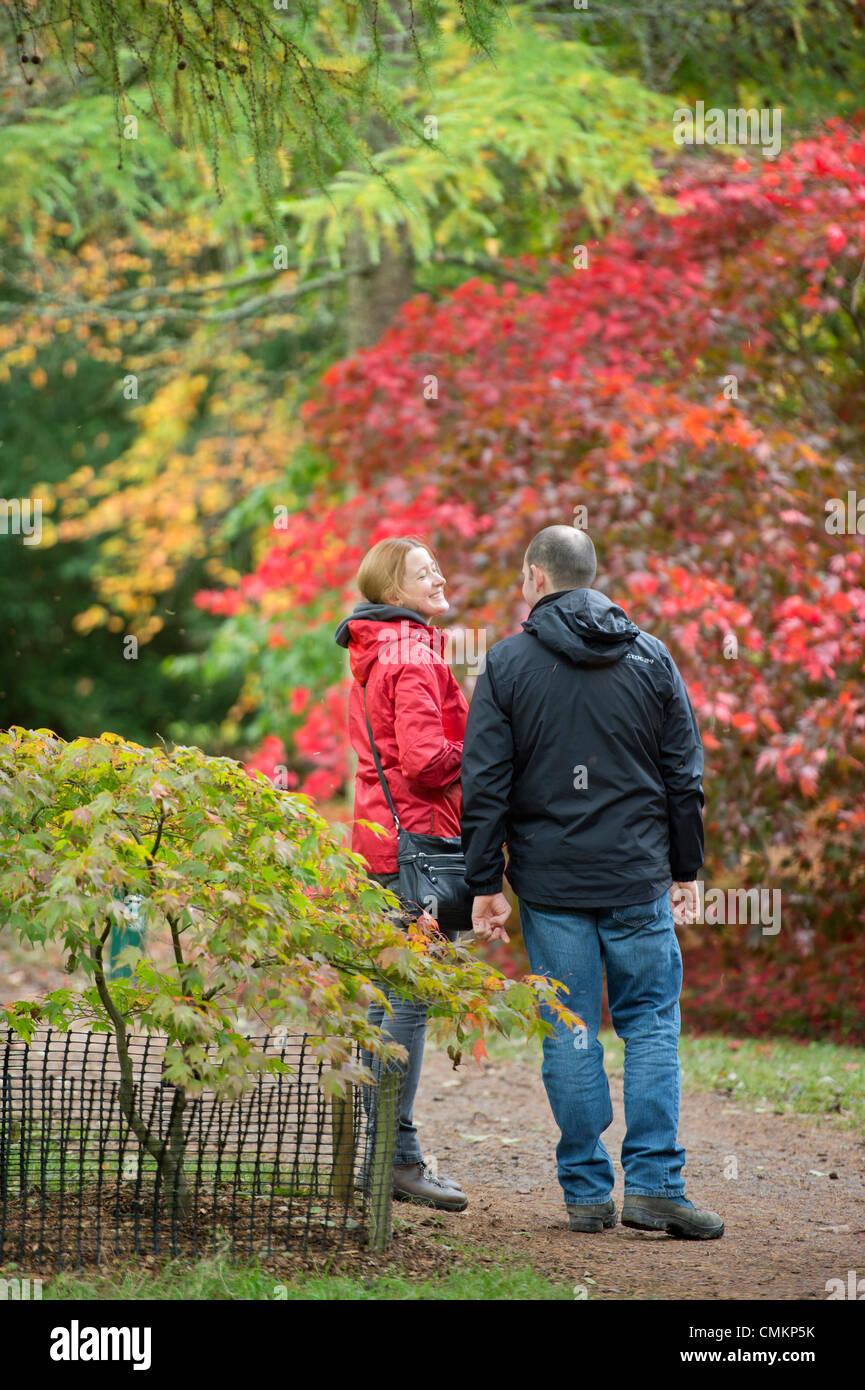 Autumn colour at Westonbirt Arboretum, Gloucestershire (2 Nov 2013). - A couple admiring a Japanese Maple. Credit: - Stock Image