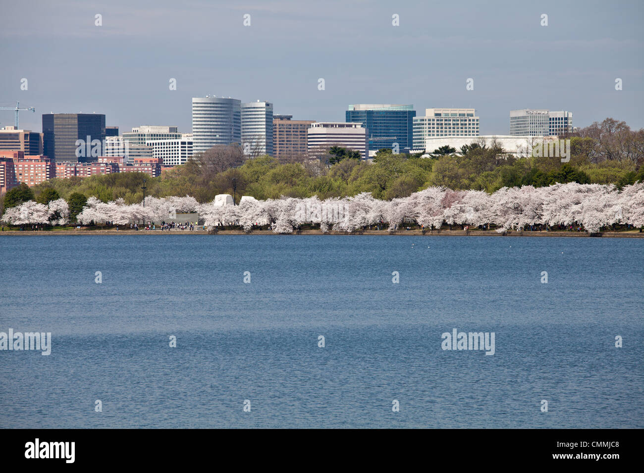Cherry blossoms around the Tidal Basin in Washington DC near Jefferson Memorial with Rosslyn city skyline - Stock Image