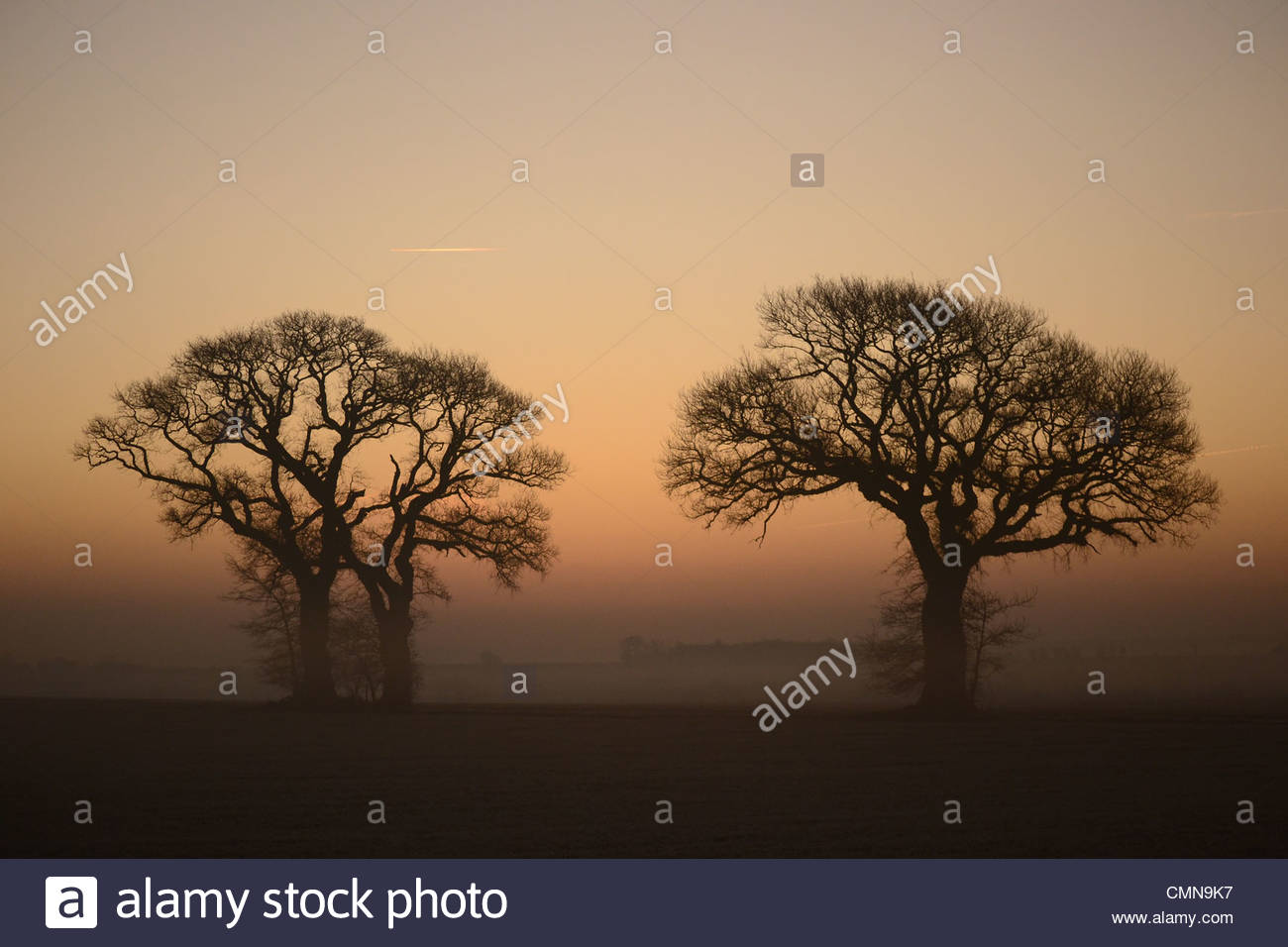 Two trees silhouetted against an orange sky just after sunrise near Godmanchester, Cambridgeshire, England, UK on - Stock Image