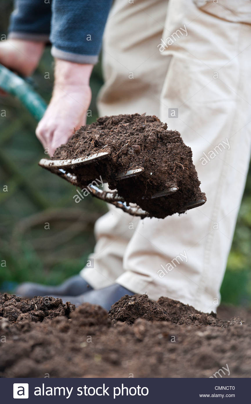 Man digging, turning and aerating the soil in a vegetable garden with a garden fork - Stock Image