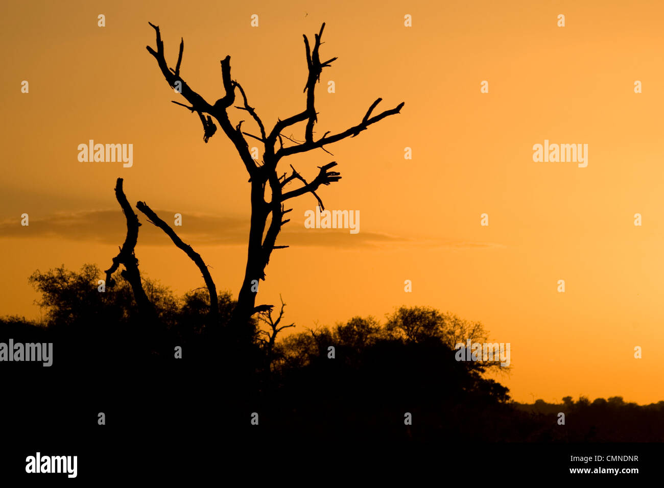 Sunset over the African bushveld in the Kruger National Park, South Africa. - Stock Image