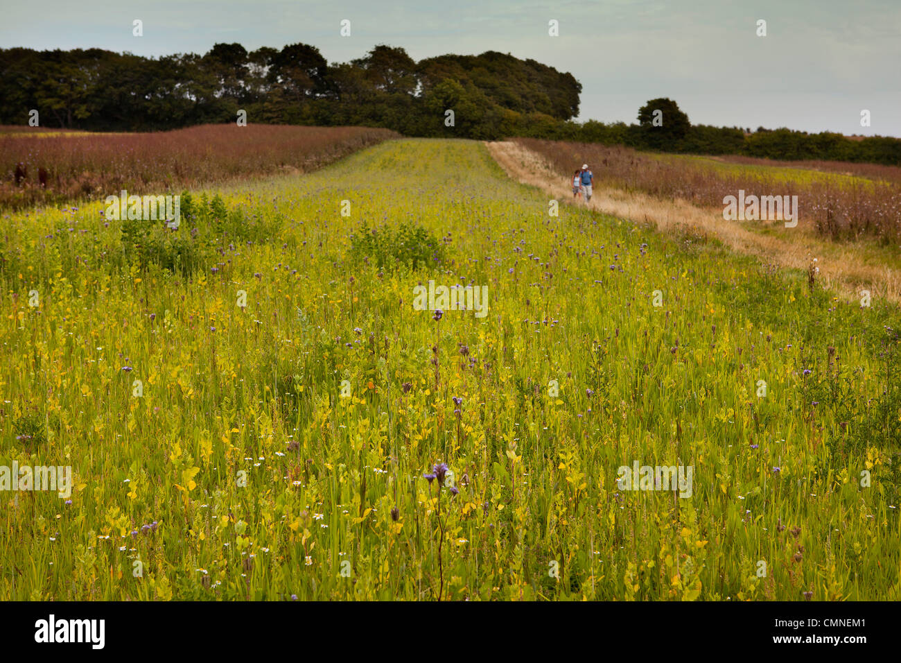 Walkers passing wildflower fallow fields in the countryside of Kent - Stock Image
