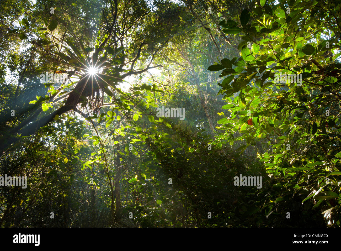 Early morning sun creating sunbeams through the humid rainforest canopy, Andasibe-Mantadia National Park, Madagascar. - Stock Image