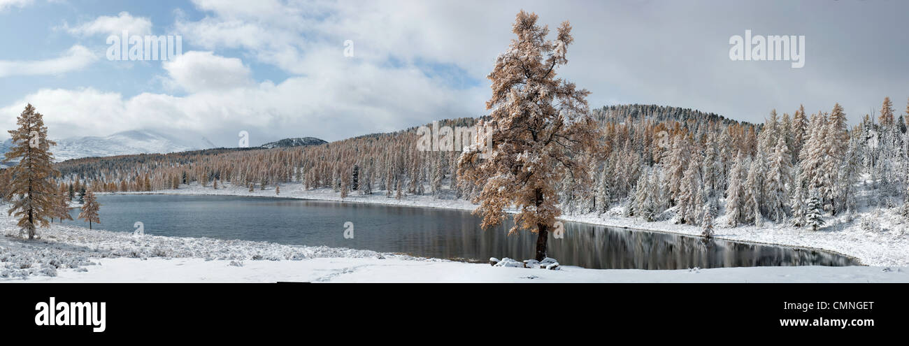 Panoramic view of winter lake and larch tree - Stock Image