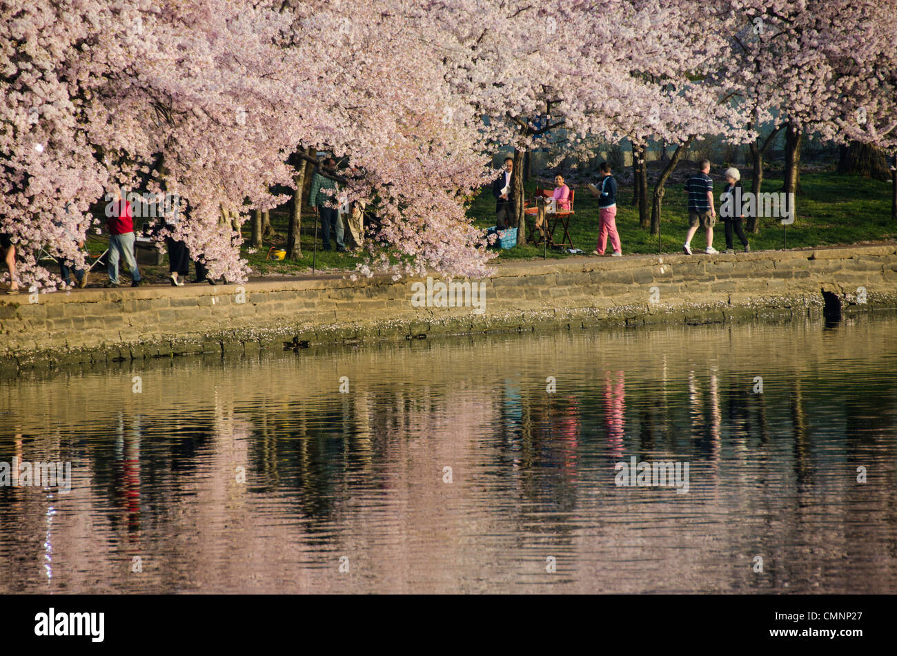 People along the edge of the Tidal Basin under the Cherry Blossoms. The Yoshino Cherry Blossom trees lining the - Stock Image