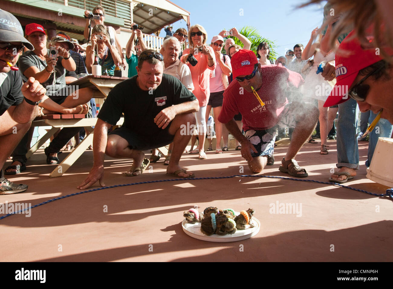 Cane toad racing during the Cooktown Discovery Festival. Cooktown, Queensland, Australia - Stock Image