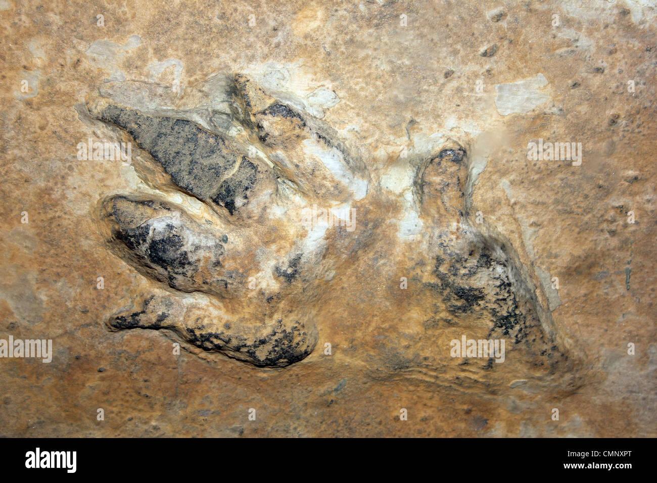 Chirotherium stortonense Footprint in Sandstone - Stock Image