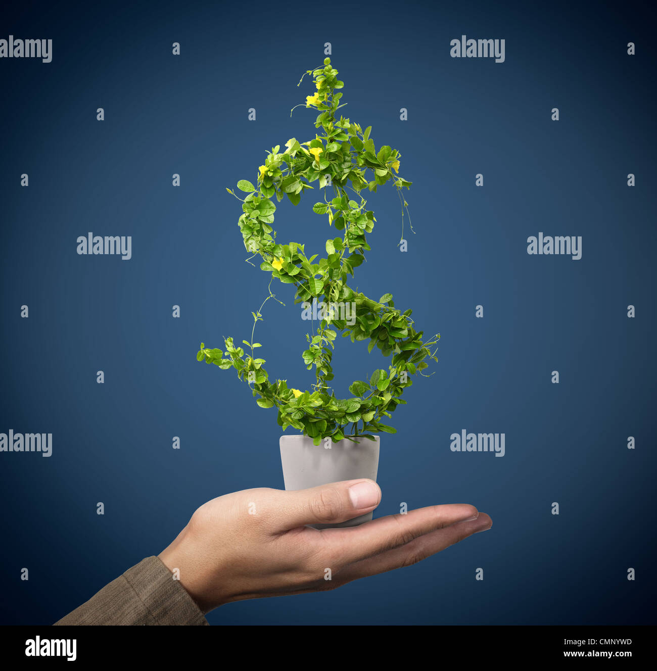 us dollar growing concept - Stock Image