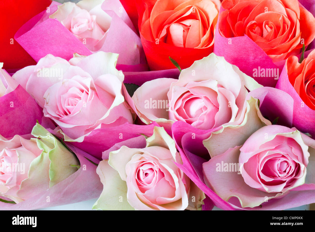 Pink Roses Wrapped In Tissue Paper Stock Photo 47197351 Alamy