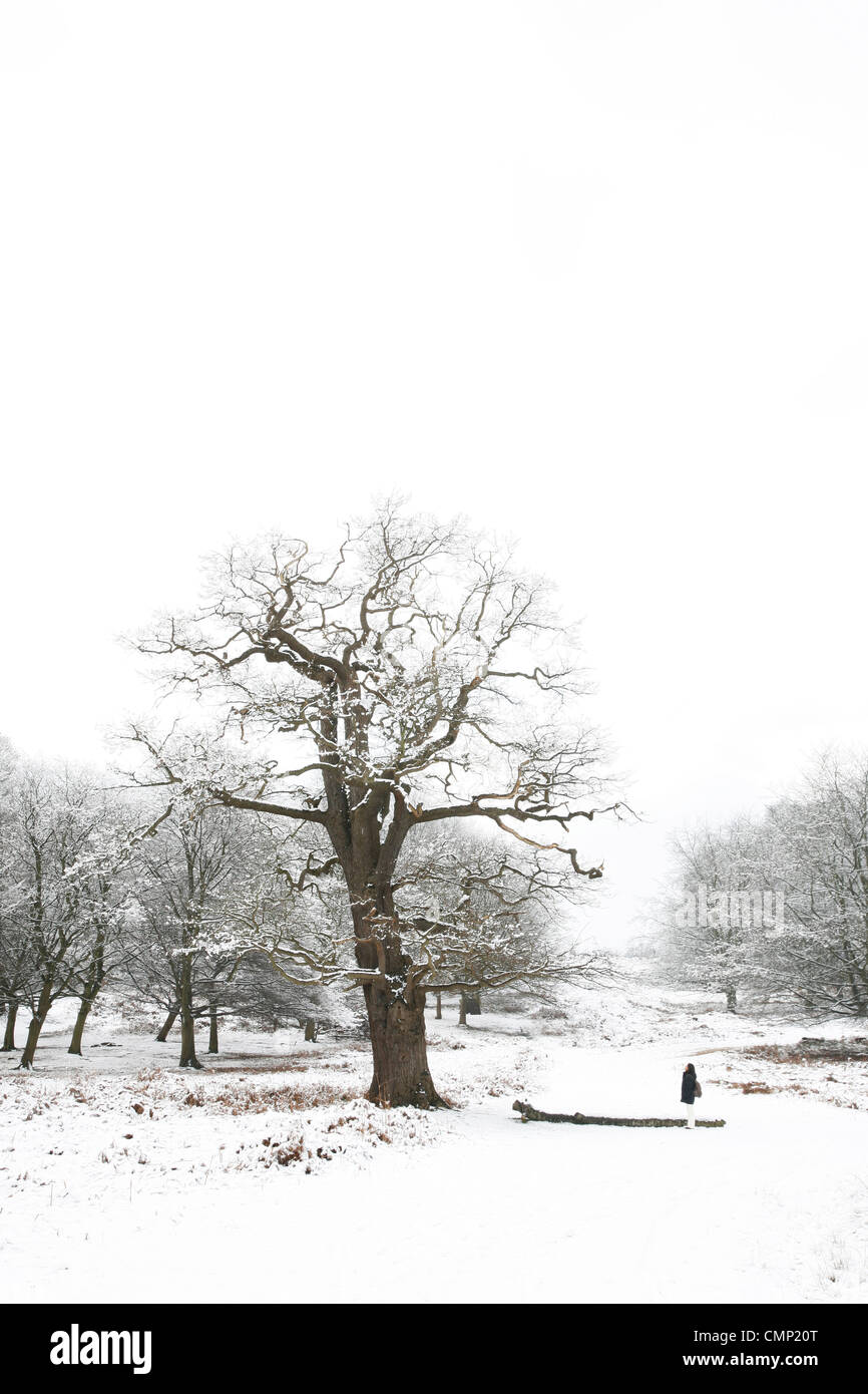 Winter landscape of Richmond Park, it is the largest park of the royal parks in London and almost three times bigger - Stock Image