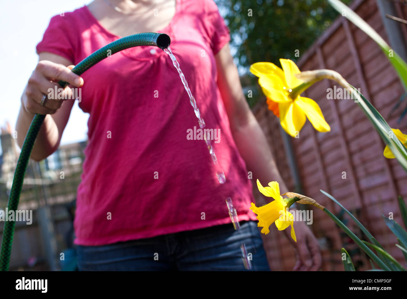 Woman watering flowers in back garden ahead of the national hosepipe ban which could be implemented due to dry weather - Stock Image