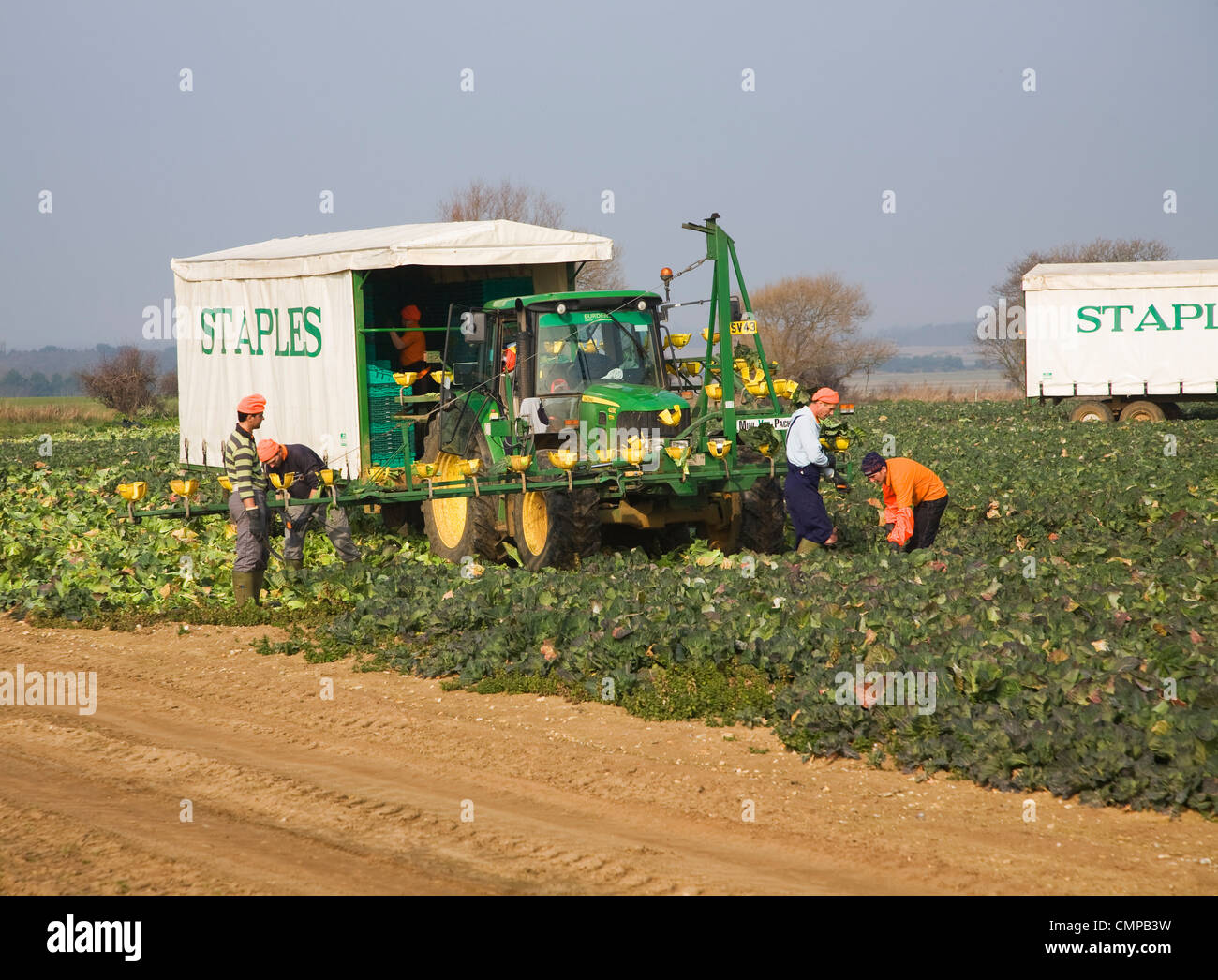 Staples vegetable harvester and team of workers, Iken, Suffolk, England - Stock Image