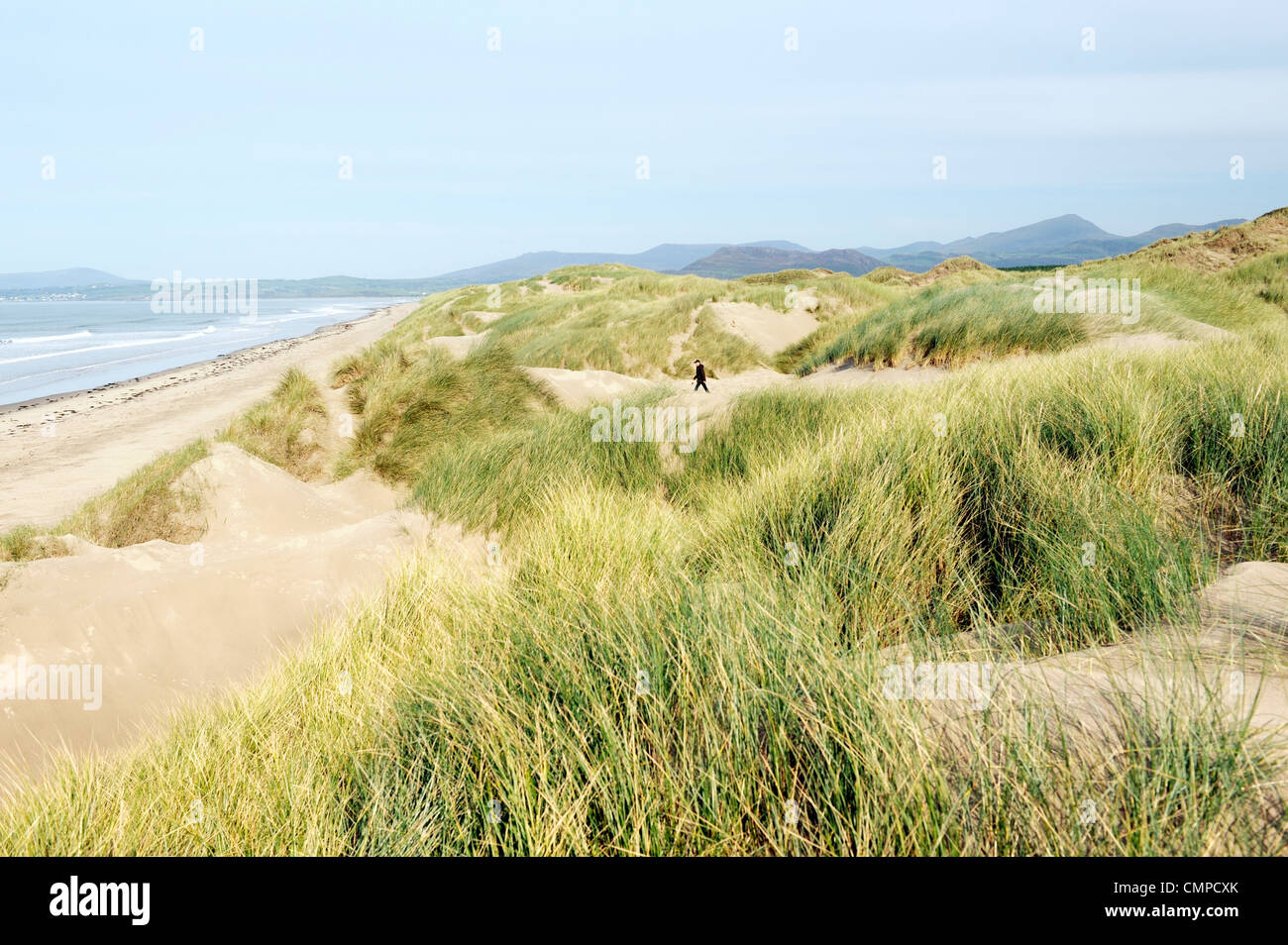 Extensive sand dunes looking north over Harlech beach to Tremadog Bay and Snowdonia at north end of Cardigan Bay, - Stock Image