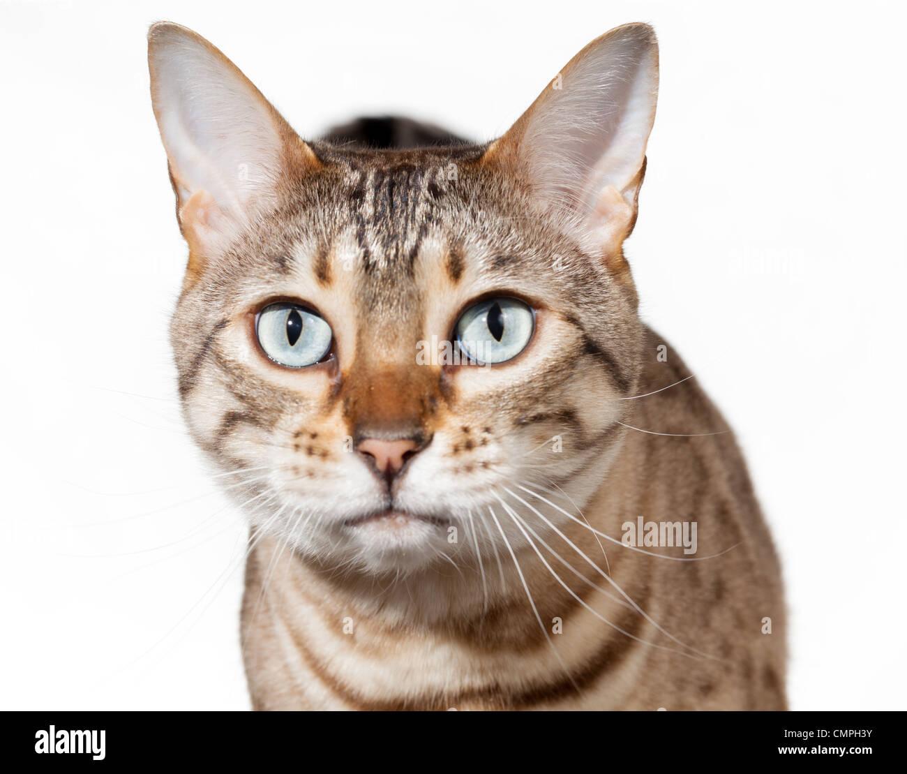 Stunned Cat
