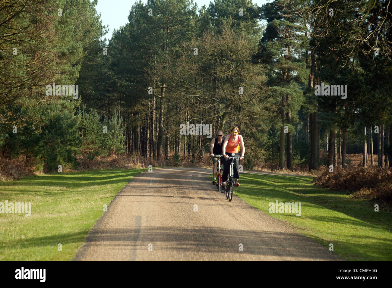 A couple cycling on the road in Thetford Forest, Norfolk UK - Stock Image