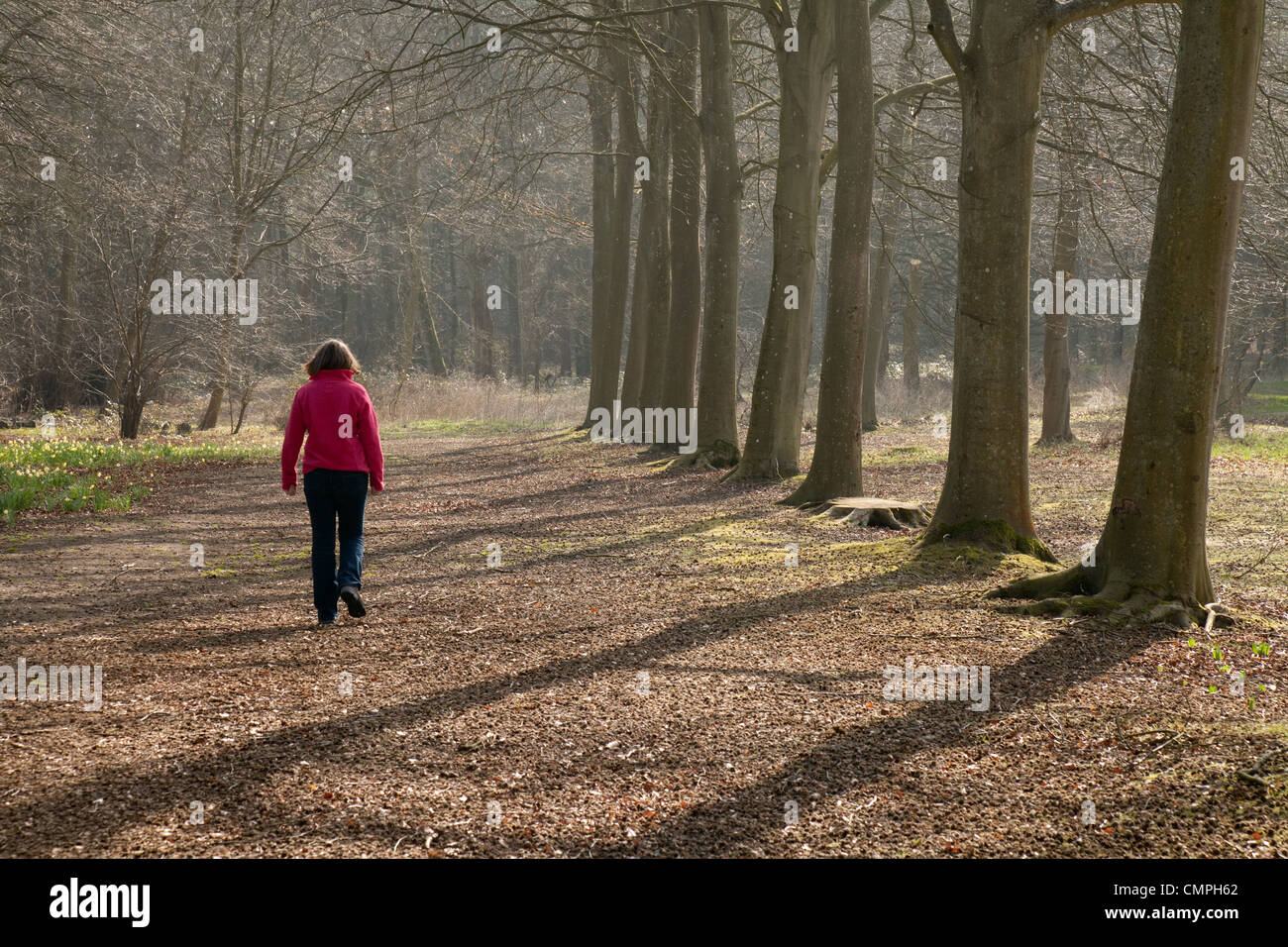 Woman walking alone in woods, rear view, Thetford Forest Norfolk UK - Stock Image