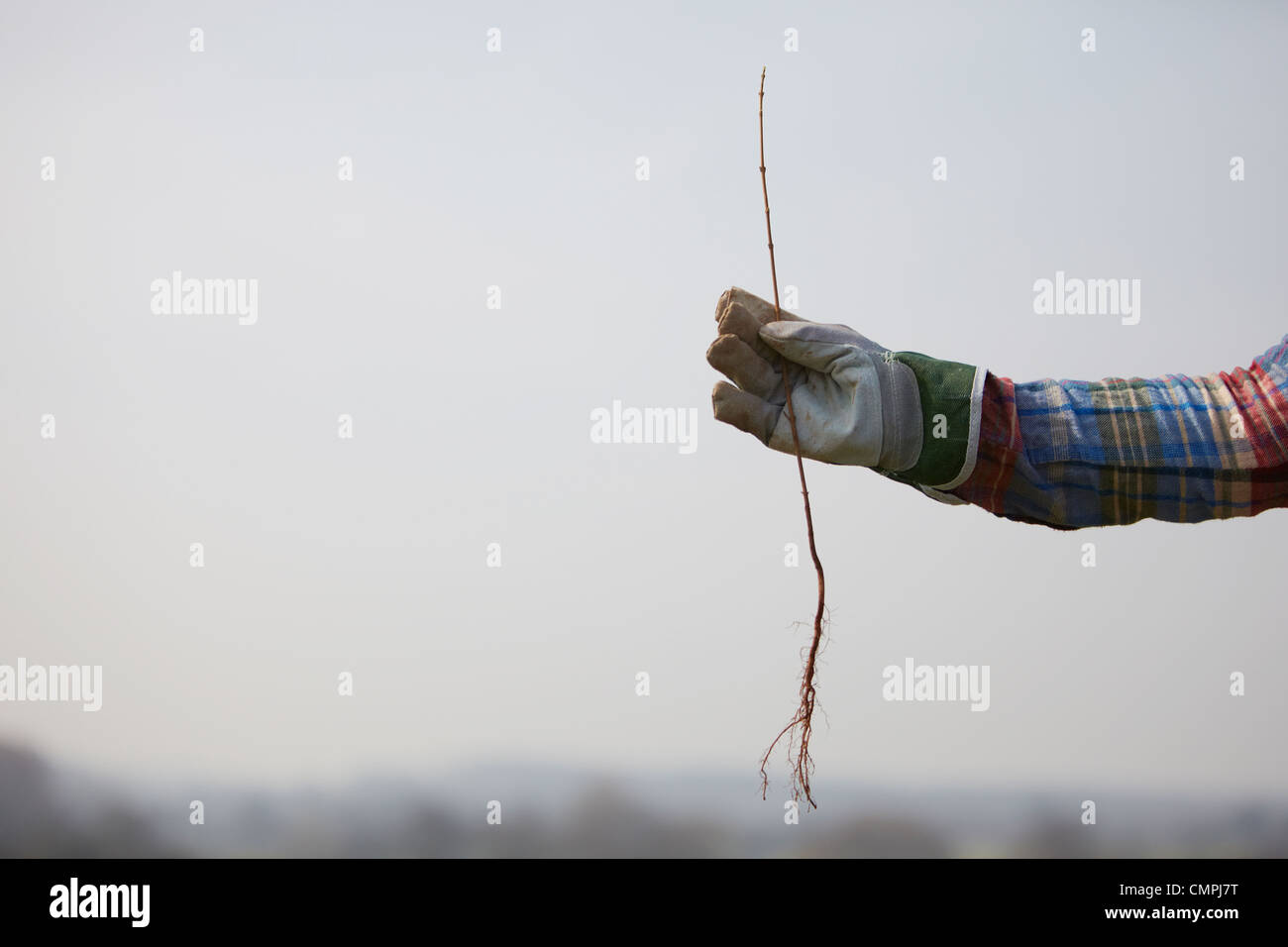 outstretched arm holding a sapling - Stock Image