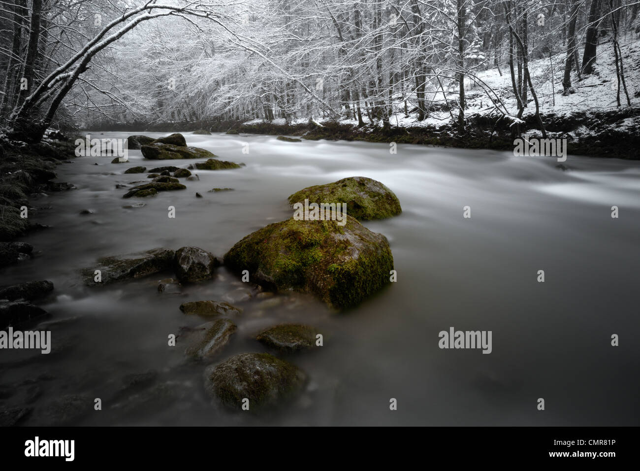 Mountain river floating through winterly forest. - Stock Image