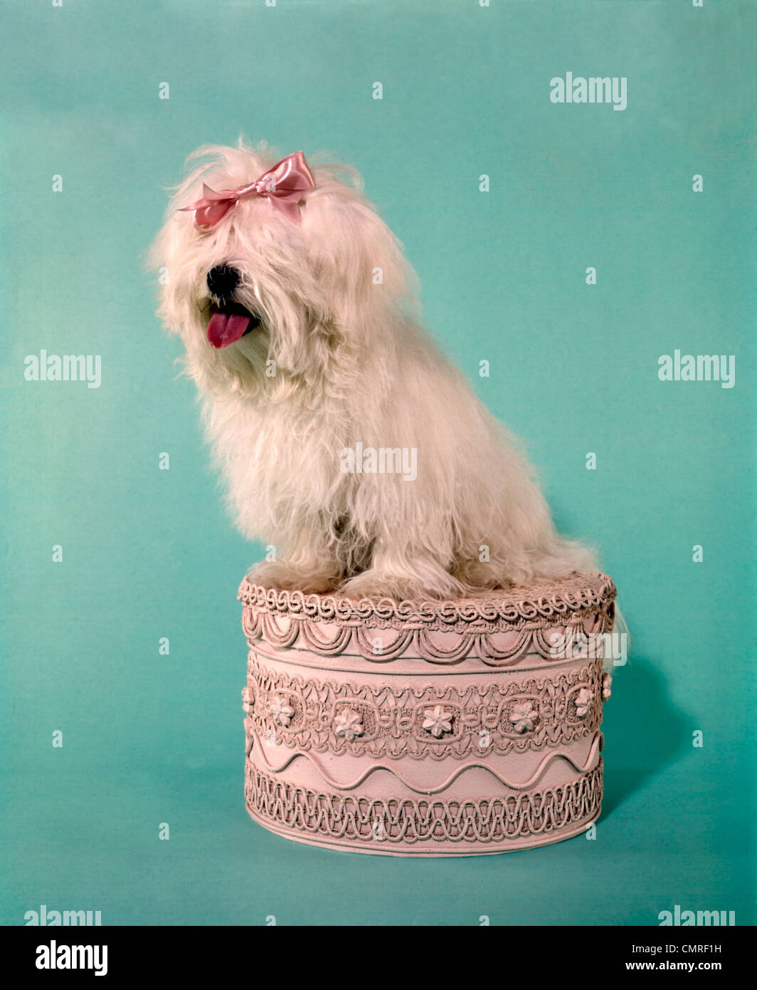 1970s WHITE SHAGGY DOG PINK BOW & PINK TONGUE SITTING ON AN  OTTOMAN STOOL DECORATED WITH LACE RICKRACK - Stock Image