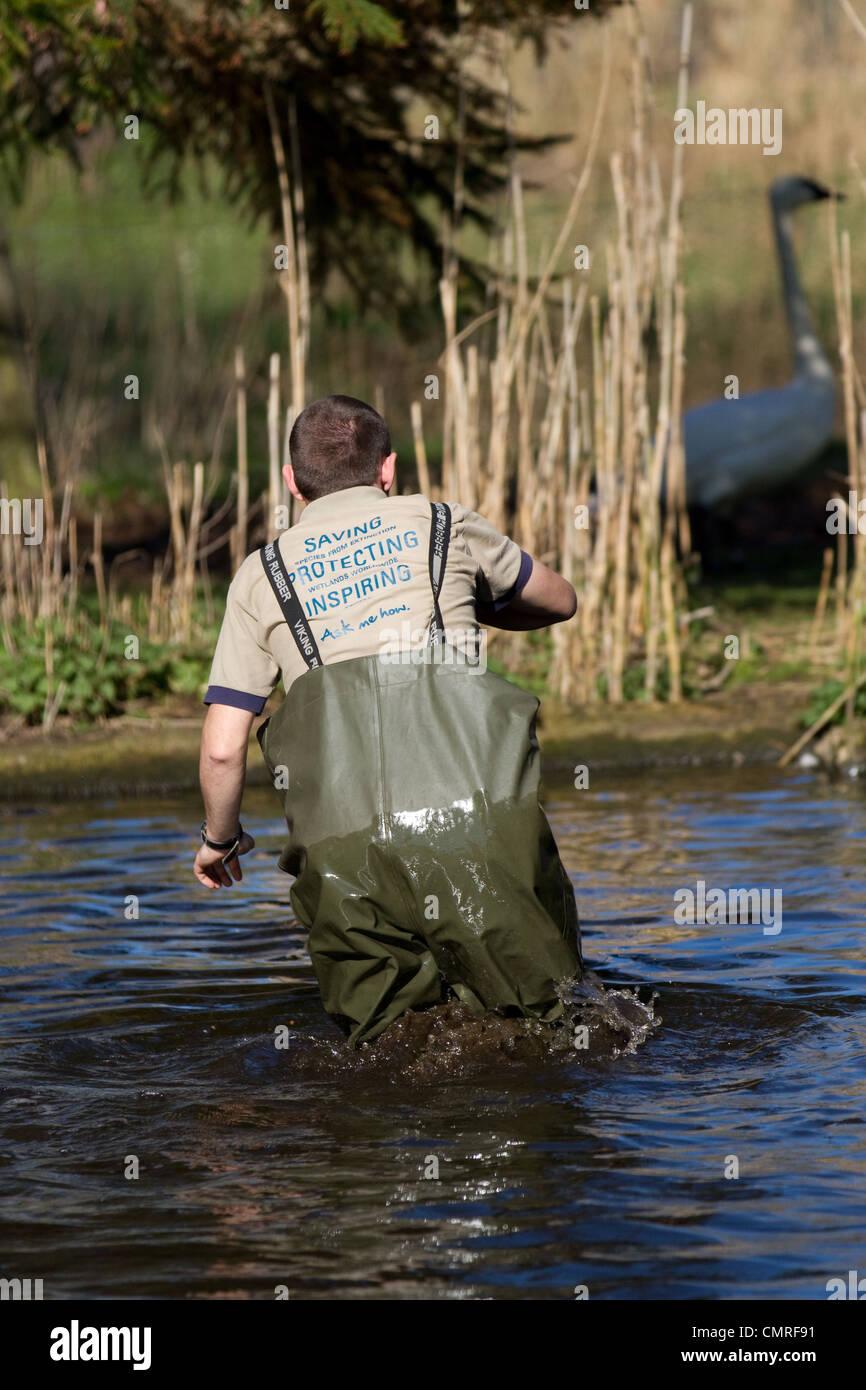 Man wearing Saving Inspiring Shirt at Martin Mere, Lancashire, UK Stock Photo