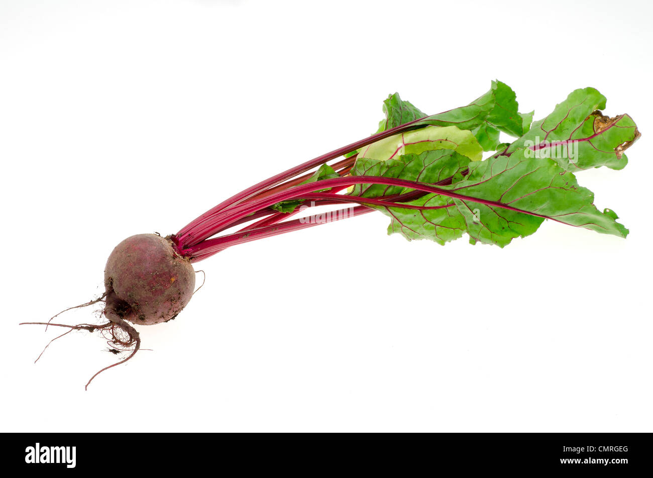 Fresh beetroot just dug from the garden - studio shot with a white background - Stock Image