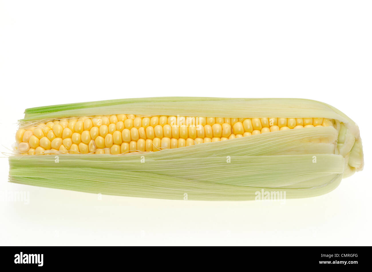 Fresh corn ears or sweetcorn shot in the studio with a white background - Stock Image