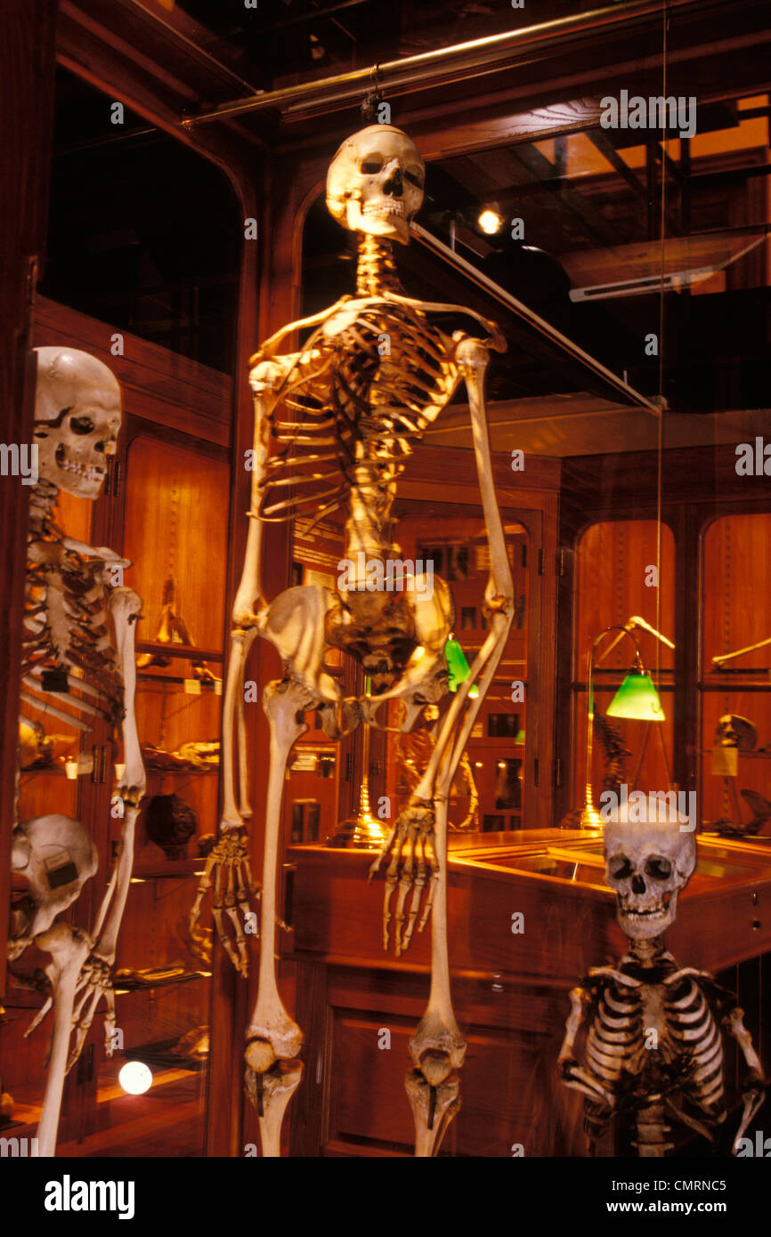 2000s HUMAN SKELETON AT THE MUTTER MUSEUM COLLEGE OF PHYSICIANS ...