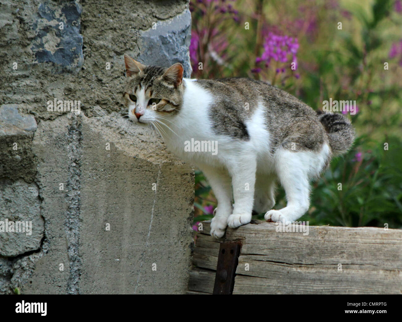 Cat Standing Wall Cat Stock Photos & Cat Standing Wall Cat Stock ...