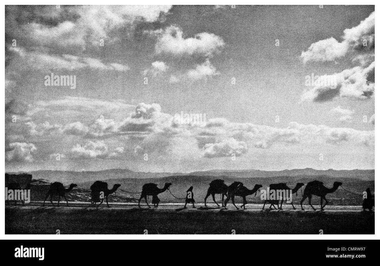 1918 Caravan of British Army Camel Crusaders Sinai Peninsula silhouetted against Sky and Desert sand - Stock Image