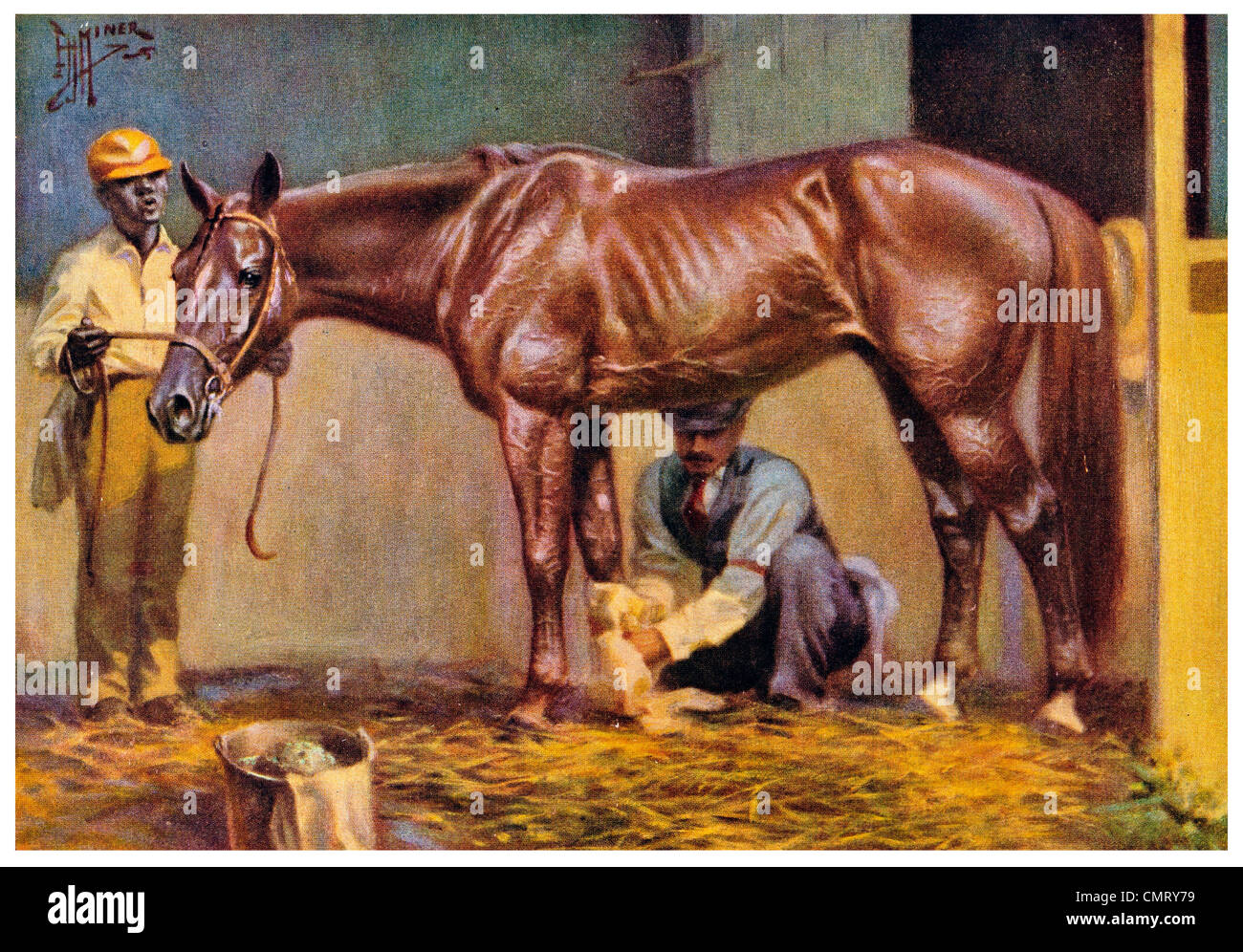 1923 Standard Bred Horse - Stock Image