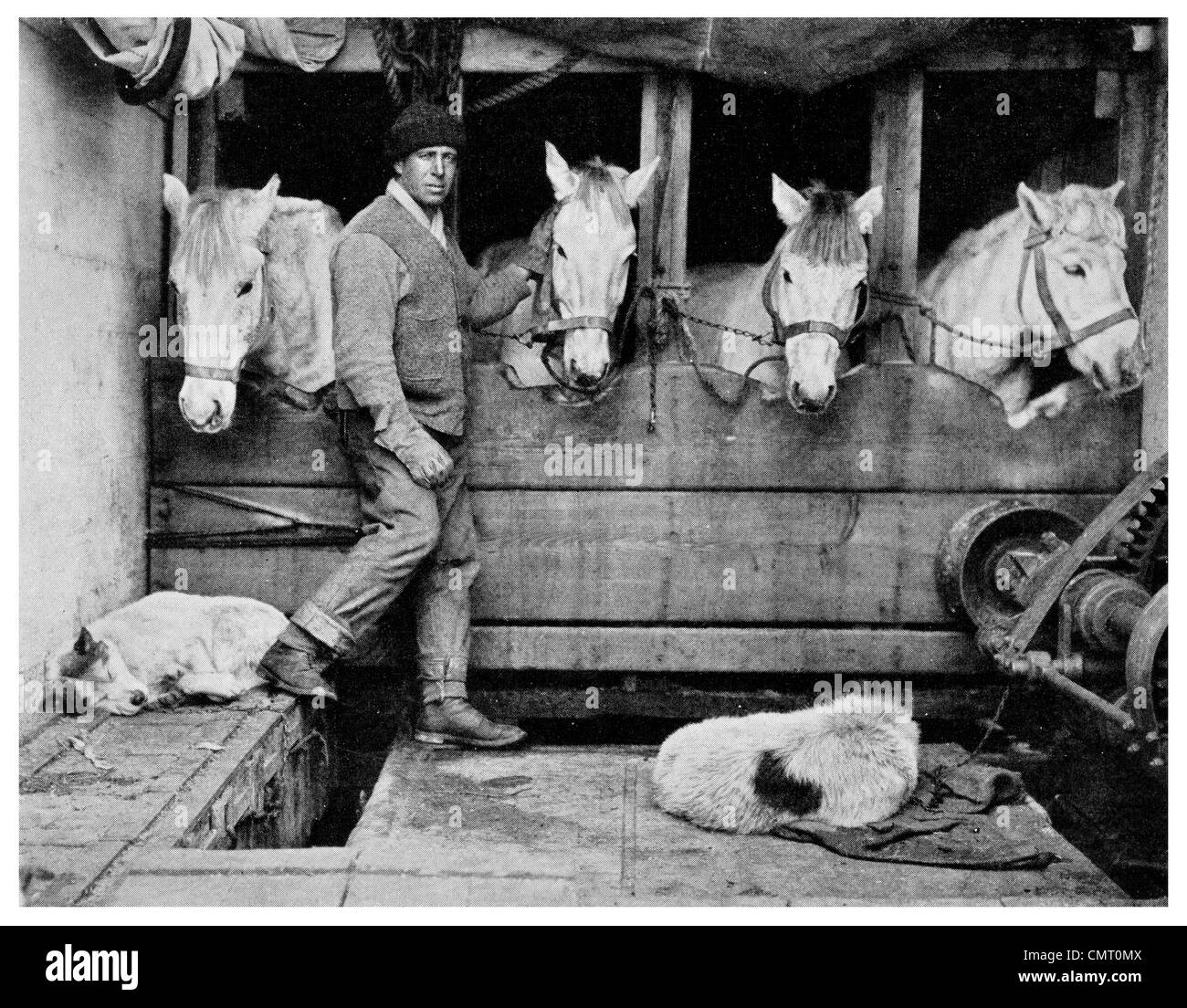 1921 Captain L E G Oates and Siberian Ponies for Captain Scott expedition South Pole Terra Nova Expedition - Stock Image