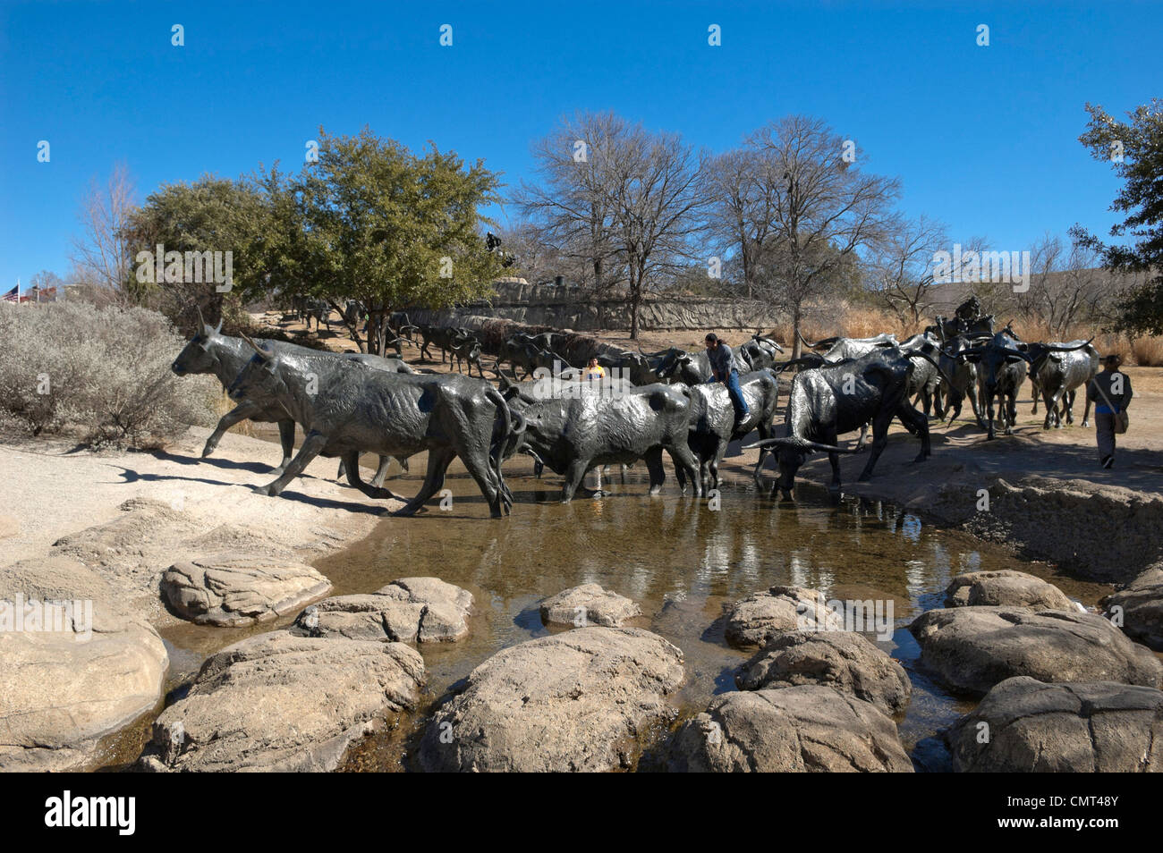 Texas - Cattle Drive sculpture in Pioneer Plaza, Dallas - Stock Image