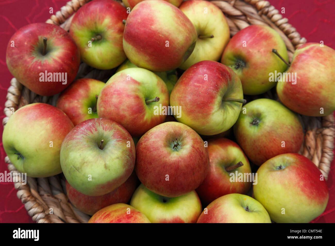 foodstuffs, fruit, pipfruit, apples in a basket, Malus domestica, Berlepsch Stock Photo