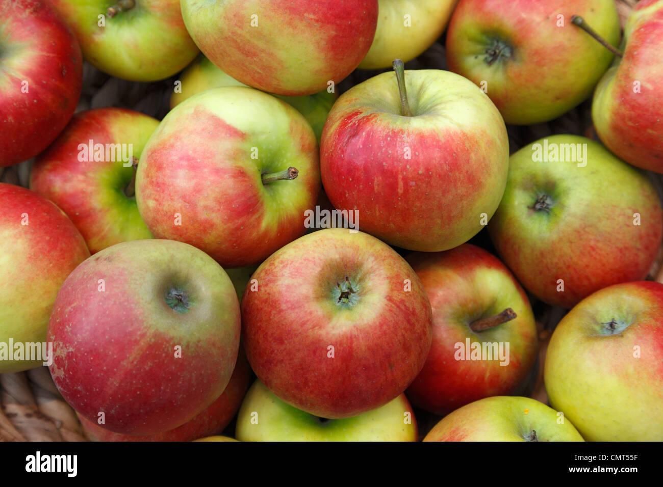 foodstuffs, fruit, pipfruit, apples, Malus domestica, Berlepsch Stock Photo