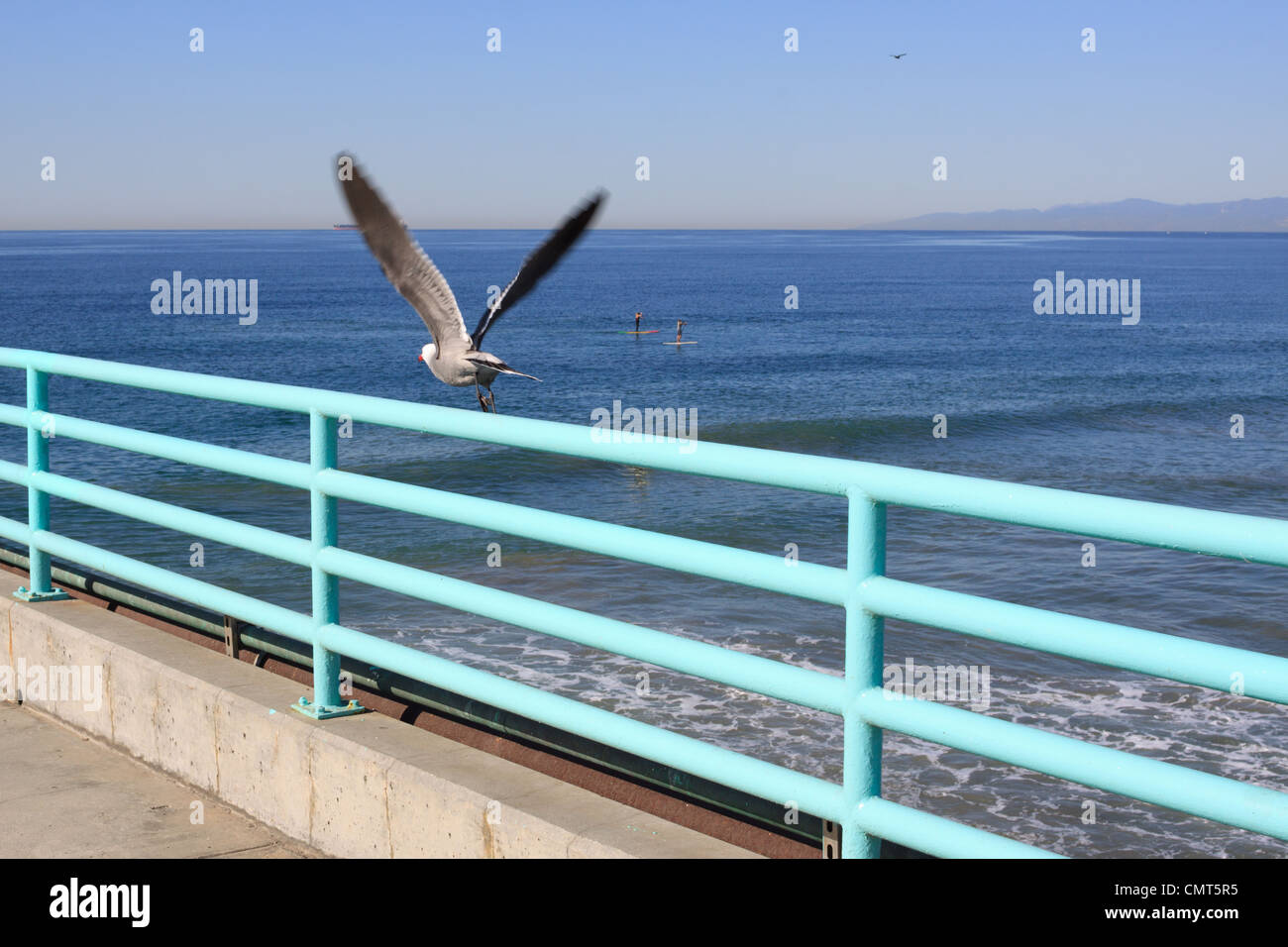 Gull at Manhattan Beach - Stock Image