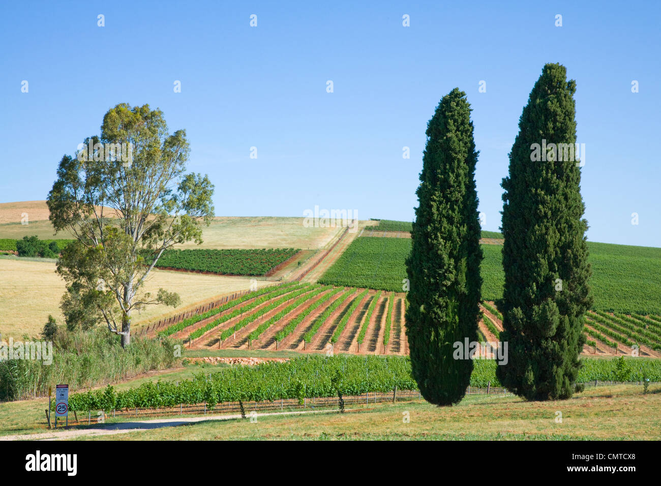 Vineyard in the Clare Valley, South Australia. - Stock Image