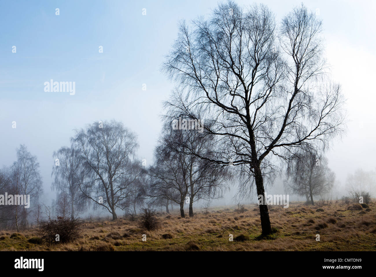 Fog at Rudge Hill, Edge Common - part of the Cotswold Commons & Beechwoods National Nature Reserve, Gloucestershire - Stock Image