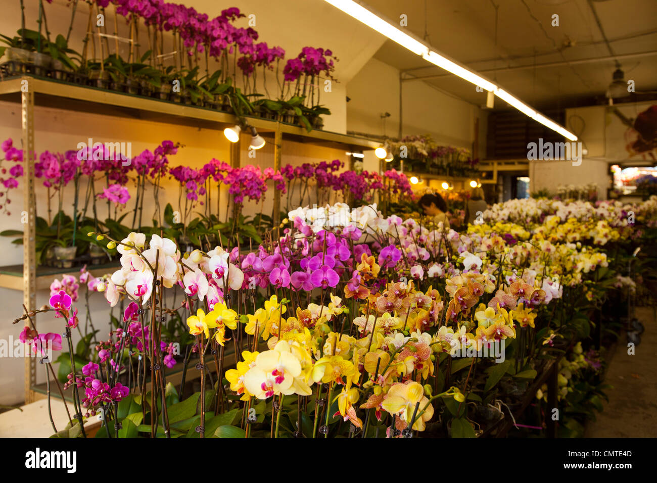 Flowers los angeles flower district stock photos flowers los flower district los angeles california usa stock image mightylinksfo