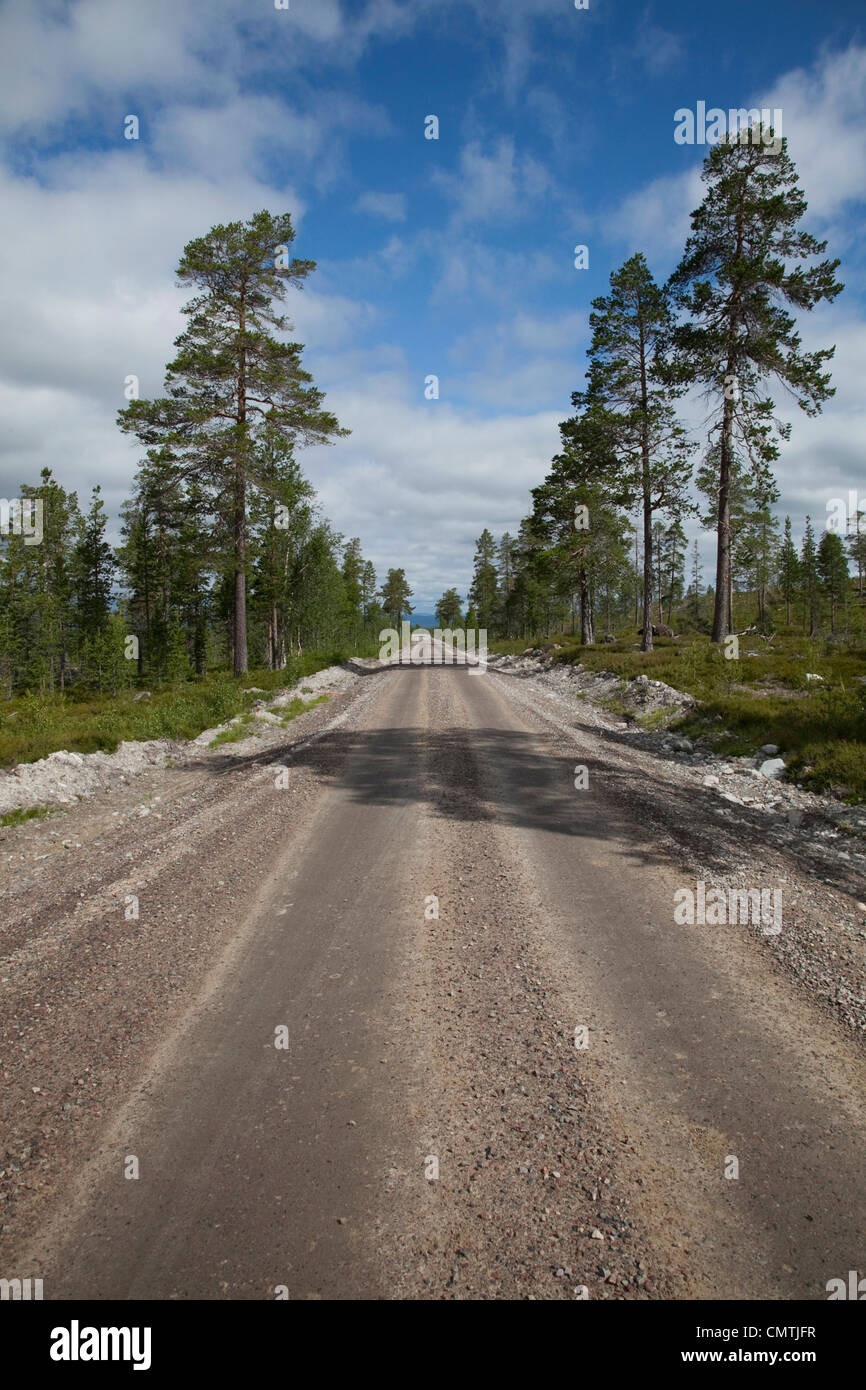 Road lined with trees - Stock Image