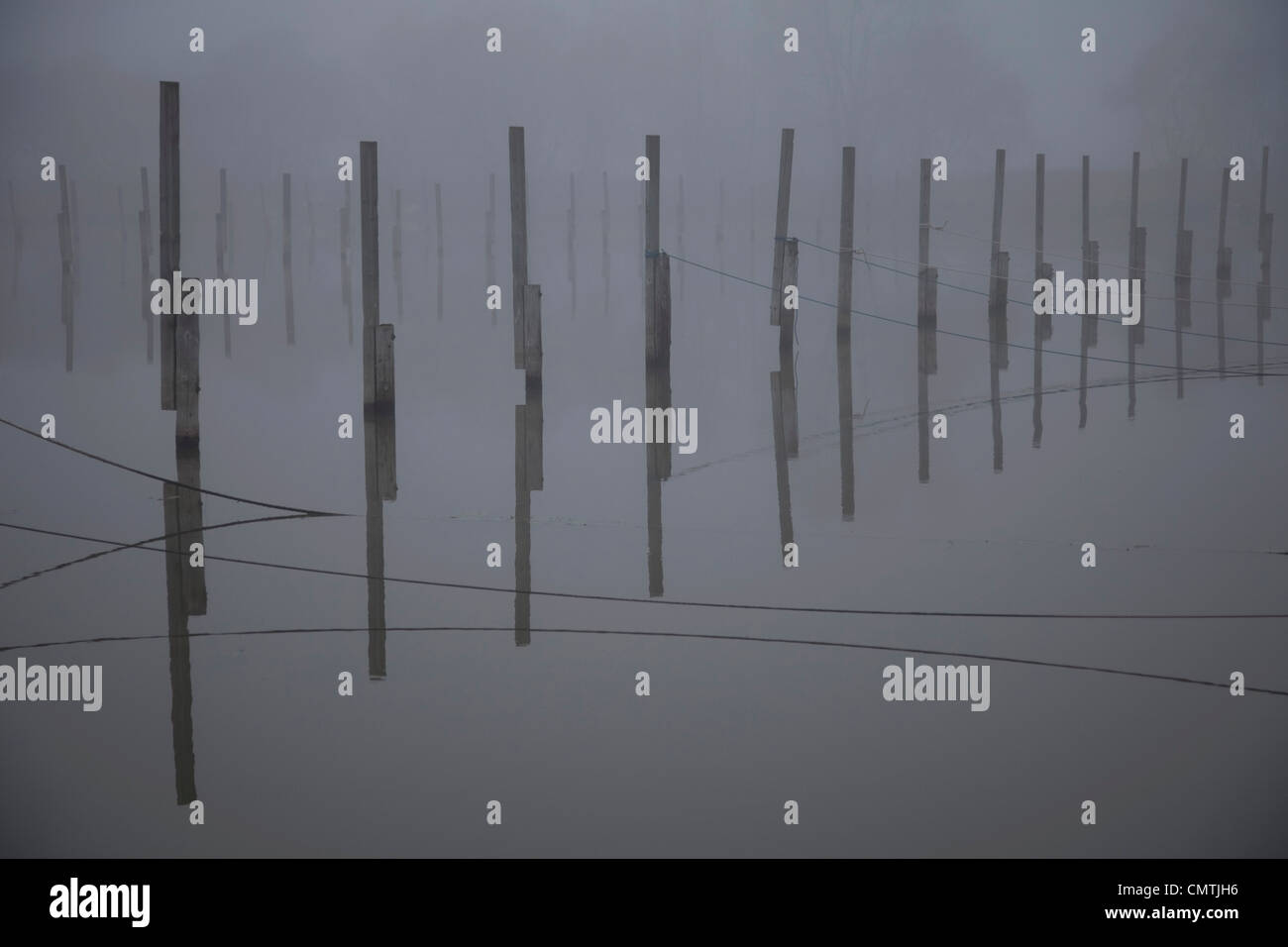Poles in water - Stock Image