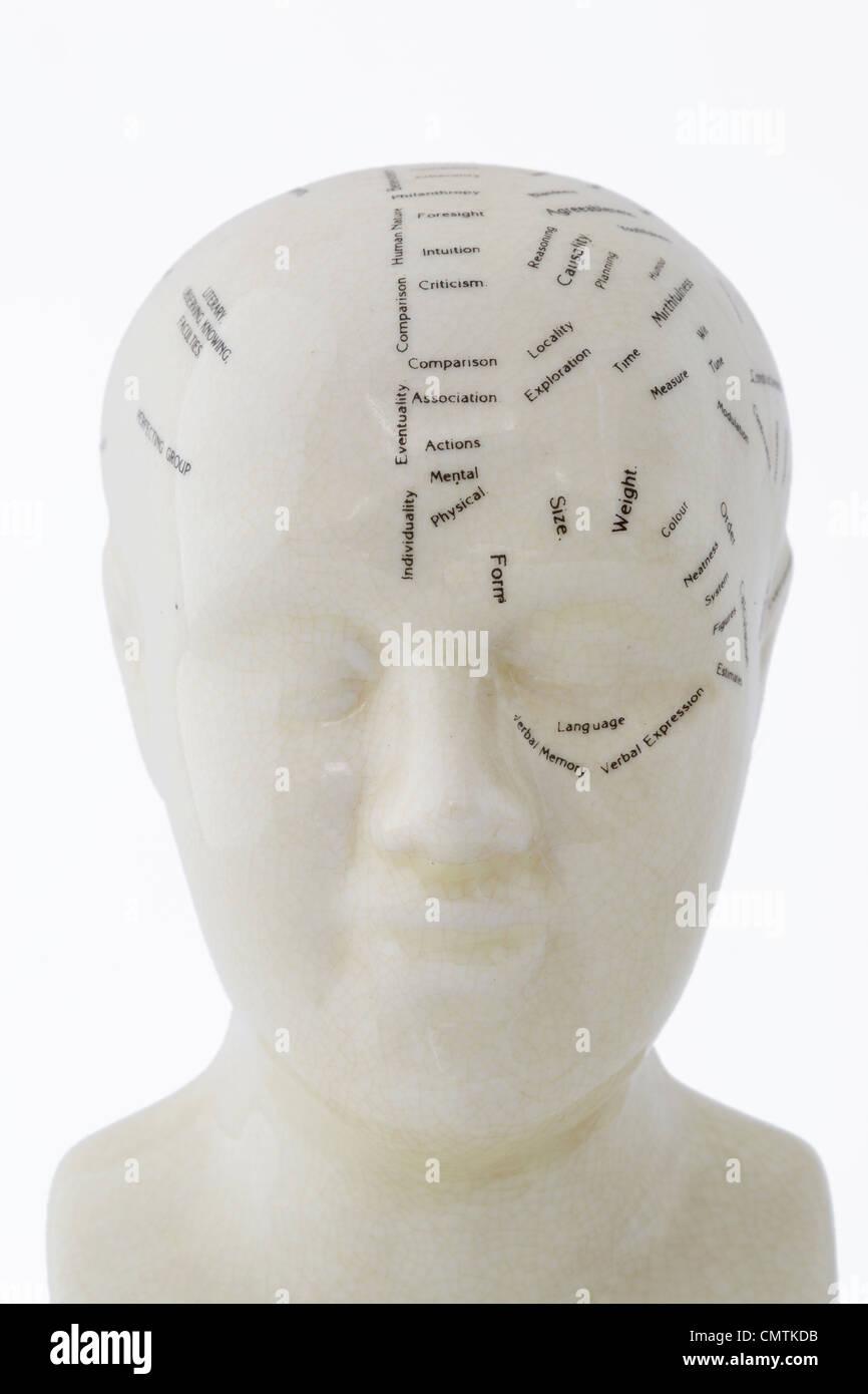 Phrenology bust on white background - Stock Image