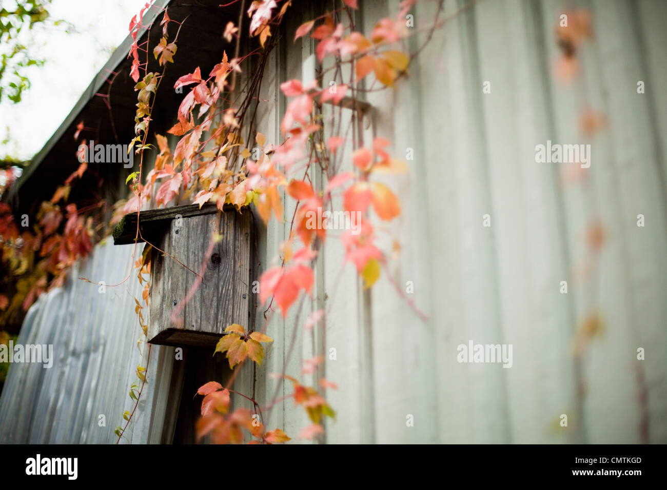 Nesting box surrounded by autumn leaves - Stock Image