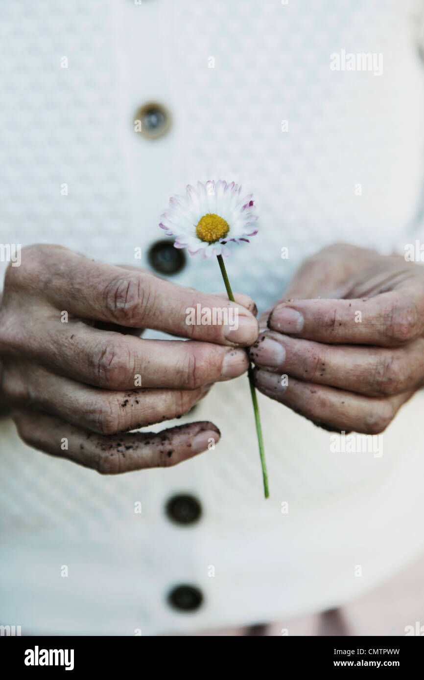 Two hands holding one flower - Stock Image