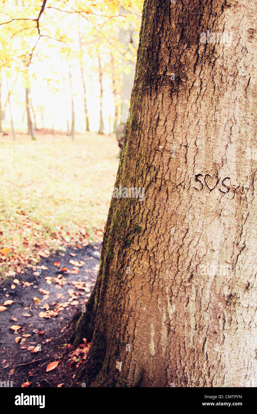 Tree trunk with text - Stock Image