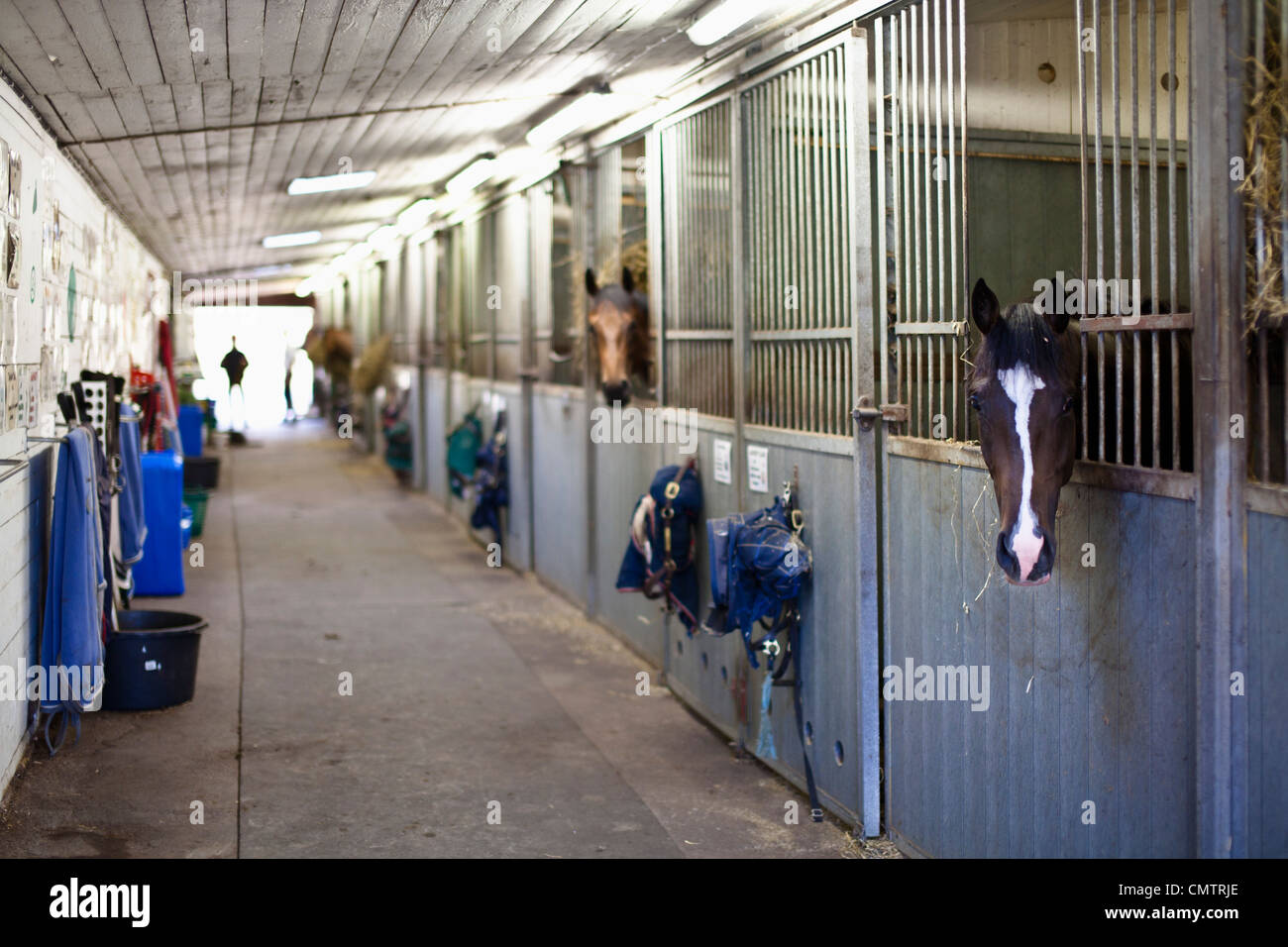 Stables with horses - Stock Image