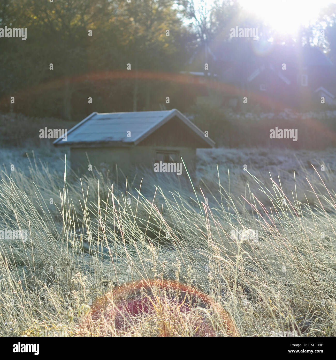 Frosty shed in autumn sun - Stock Image