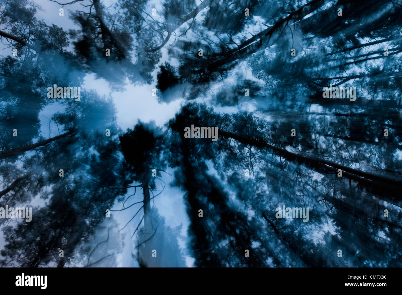 Tree tops - Stock Image